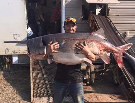 monster-paddlefish